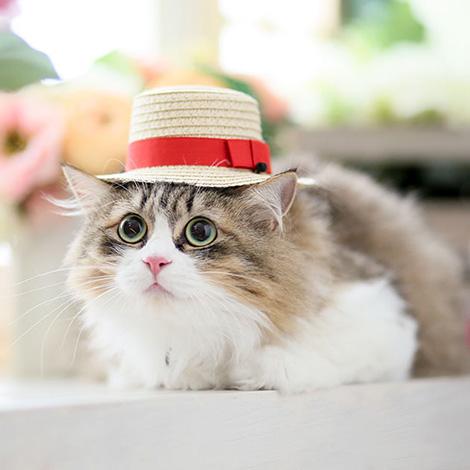 ペットフォト・犬・猫